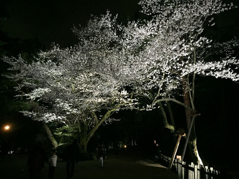 blossom_night